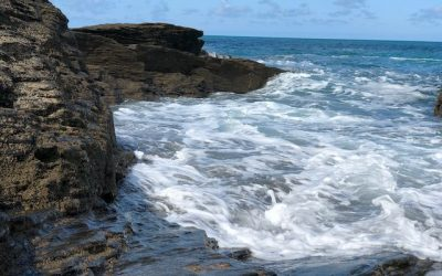 News: The Risky Seas